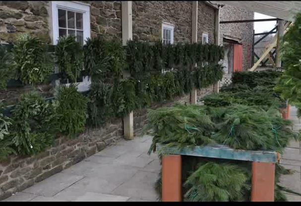 Precut Trees For Sale