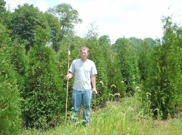 Jamie and his american arborvitae